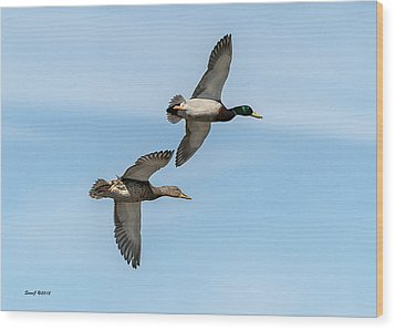 Mallards In Flight Wood Print by Stephen  Johnson