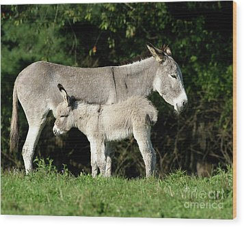 Mama Donkey And Baby Wood Print by Deborah  Smith