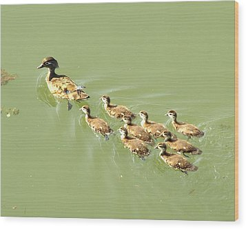Mama Duck And Ducklings Wood Print by James Granberry