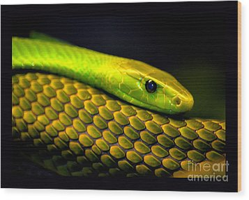 Mamba On Mamba Wood Print by Susanne Still