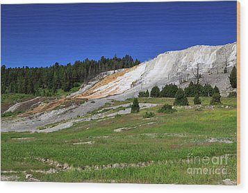 Mammoth Hot Springs Lower Terrace Wood Print by Louise Heusinkveld