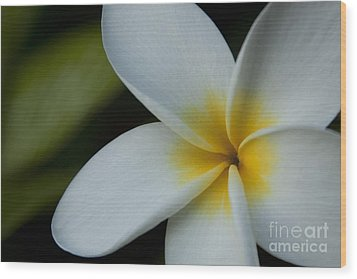 Mana I Ka Lani - Tropical Plumeria Hawaii Wood Print by Sharon Mau