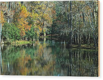 Manatee Spring Florida Wood Print by Ronald T Williams