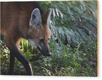 Maned Wolf Wood Print by Karol Livote