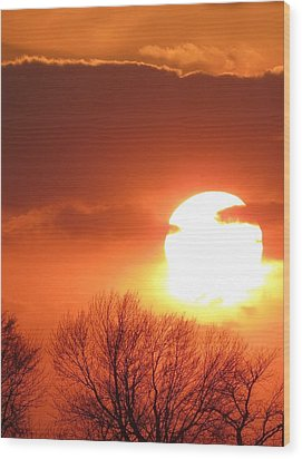 Mango Sunset Kansas Tree Silhouette Wood Print