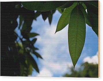Mango Tree Leaf Wood Print by Anya Brewley schultheiss