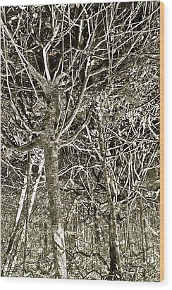 Mangrove Abstract Wood Print by John Colley