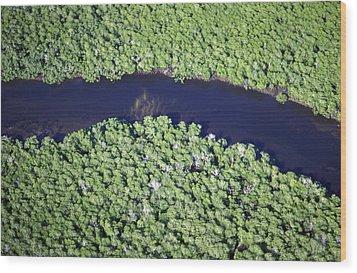 Mangrove River Wood Print by Alexis Rosenfeld