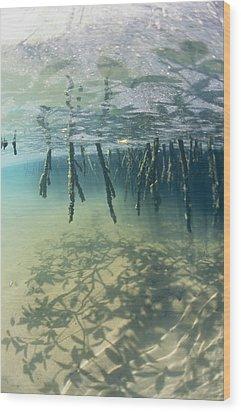 Mangrove Tree Roots Cast Shadows Wood Print by Nick Caloyianis