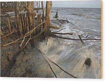 Mangrove Trees Protect The Coast Wood Print by Tim Laman