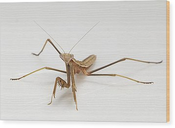 Wood Print featuring the photograph Mantis 1 by John Crothers