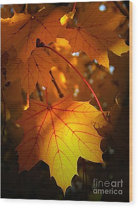 Maple At First Light Wood Print by Sue Stefanowicz
