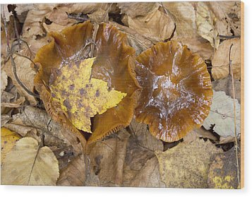 Maple Leaf And Mushrooms Wood Print by Tom Bushey