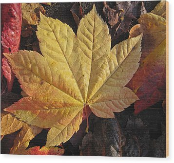 Maple Leaf Close Up  Wood Print by Robert  Perin