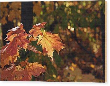 Maple Leaf Glow Wood Print by James Hammen