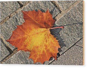 Maple Leaf In Fall Wood Print by Carolyn Marshall