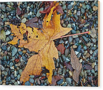 Maple Leaf On The Rocks Wood Print by Tikvah's Hope