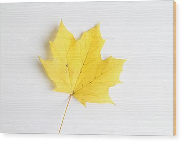 Maple Leaf Wood Print by Photo Researchers