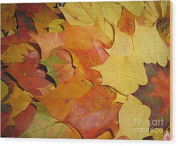 Maple Rainbow Wood Print by Ausra Huntington nee Paulauskaite