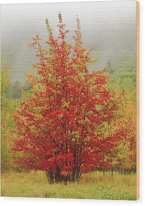 Maples In The Mist Wood Print by Roupen  Baker