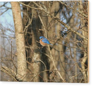 March Bluebird Wood Print by Neal Eslinger