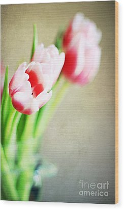March Tulips Wood Print by Darren Fisher