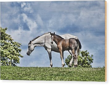Mare And Foal Wood Print by Steve Purnell