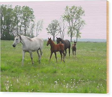 Mares And Foals In Dandelions Wood Print