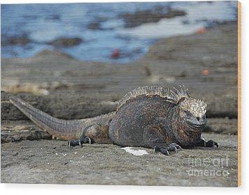 Marine Iguana Lying On Rock By Water Wood Print by Sami Sarkis
