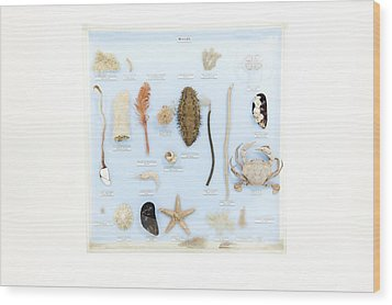 Marine Life Specimens Wood Print by Gregory Davies, Medinet Photographics