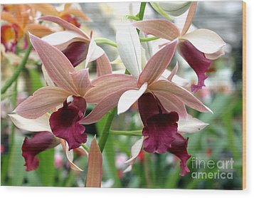 Wood Print featuring the photograph Maroon Bloom by Debbie Hart