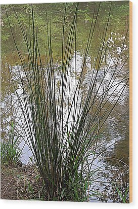 Wood Print featuring the photograph Marsh Grass by Renee Trenholm