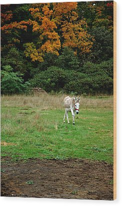 Marys Donkey Wood Print by LeeAnn McLaneGoetz McLaneGoetzStudioLLCcom