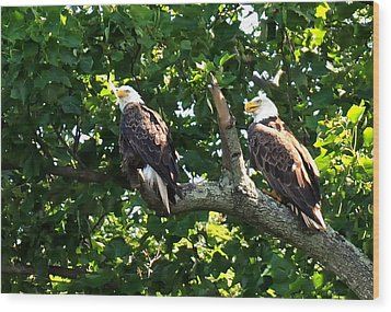 Wood Print featuring the photograph Mating Pair by Randall Branham