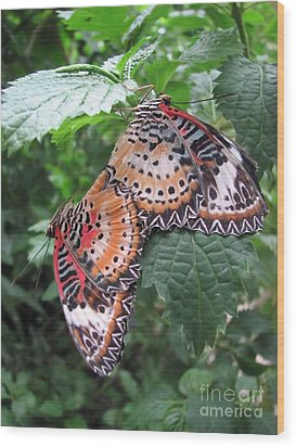 Mating Season Wood Print by Michelle H