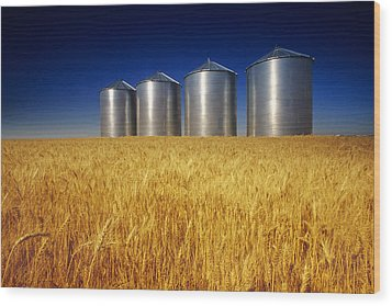 Mature Winter Wheat Field With Grain Wood Print by Dave Reede