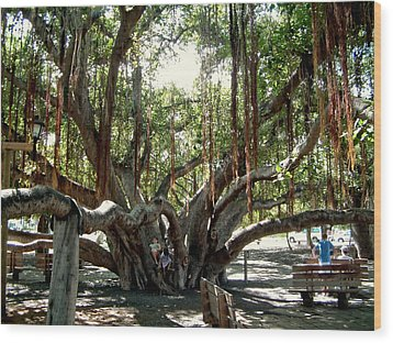 Wood Print featuring the photograph Maui Banyan Tree Park by Rob Green
