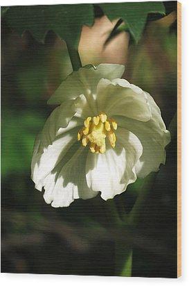 Mayapple Blossom Wood Print by Rebecca Overton