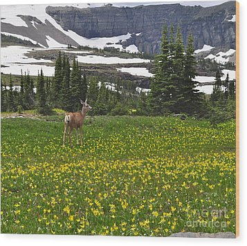 Wood Print featuring the photograph Meadow Deer by Johanne Peale