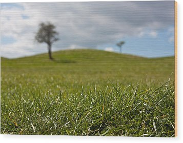 Meadow Wood Print by Semmick Photo