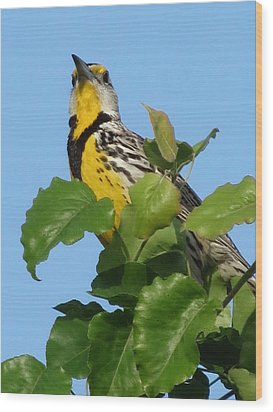 Meadowlark Wood Print
