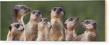 Meerkat Mob Wood Print by Julie L Hoddinott