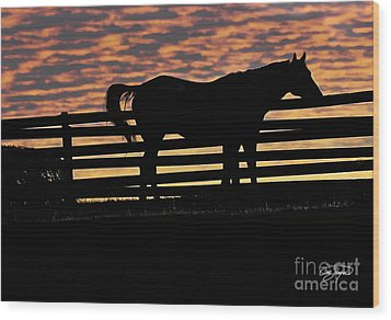 Memorial Day Weekend Sunset In Georgia - Horse - Artist Cris Hayes Wood Print by Cris Hayes