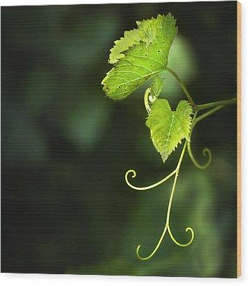 Memories Of Green Wood Print by Evelina Kremsdorf