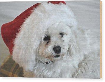 Santa's Hat Wood Print by Lisa  DiFruscio
