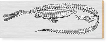 Mesosaurus Brasiliensis Wood Print by Science Source