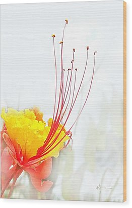 Mexican Bird Of Paradise Wood Print by Kume Bryant
