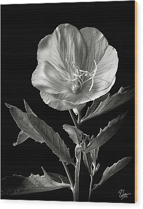 Wood Print featuring the photograph Mexican Evening Primrose In Black And White by Endre Balogh