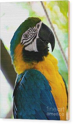 Mexican Parrot Wood Print by Natalia Babanova