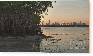 Miami With Mangroves Wood Print by Matt Tilghman